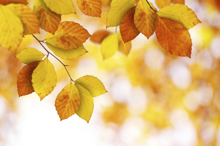 fall_blog